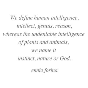 The name of intelligence