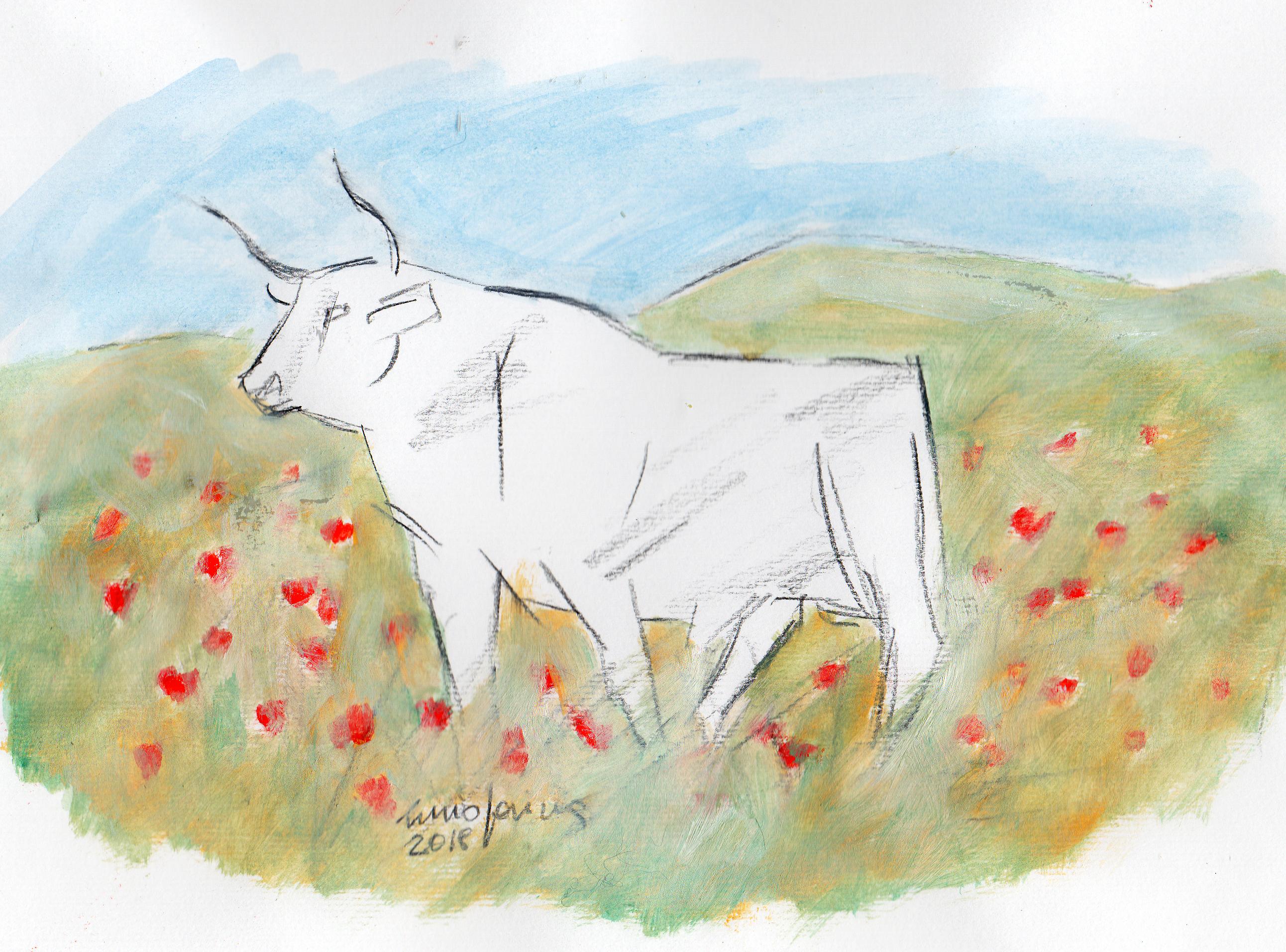 bull177